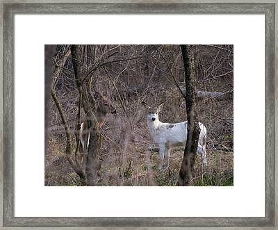Genetic Mutant Deer Framed Print