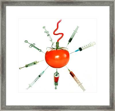 Genetically Modified Tomato Framed Print by Radoslav Nedelchev