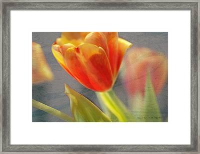 Gentility Framed Print by Jessica Manelis