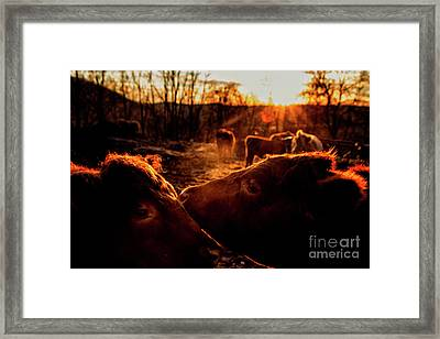 Gentle Beasts Framed Print