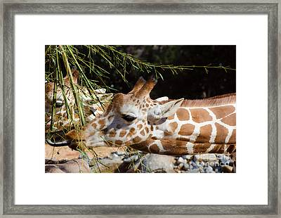 Gentle Beauty Framed Print by Donna Brown