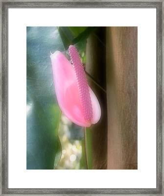Gentle Beauty Framed Print