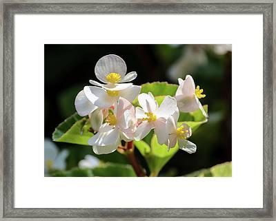 Gentle Bloom Framed Print