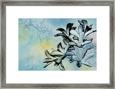 Gentle Blooms Framed Print by Manjot Singh Sachdeva