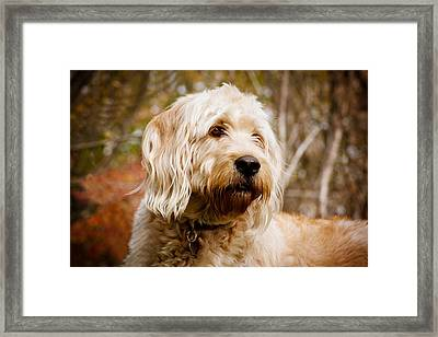 Gentle Boy Framed Print