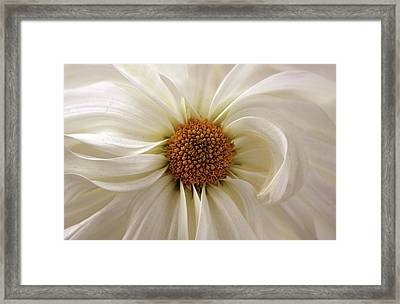 Gentle Curves Framed Print by Jessica Jenney