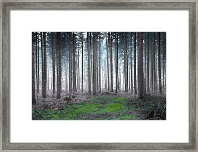 Gentle Dawn Framed Print by Svetlana Sewell