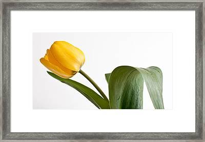 Gentle Flow Framed Print by Maggie Terlecki