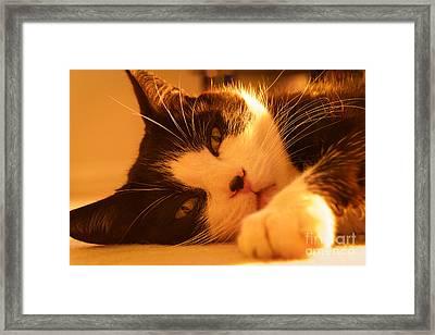 Gentle Friend Framed Print by David Warrington