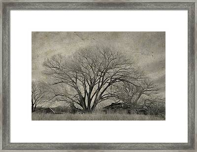Framed Print featuring the photograph Gentle Giant by Barbara Manis