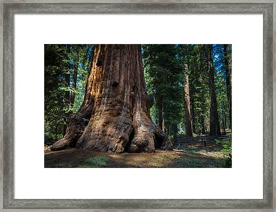 Gentle Giant Framed Print