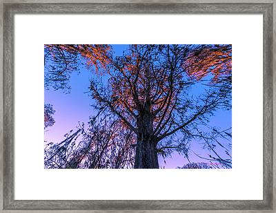 Gentle Giant Framed Print by Marvin Spates