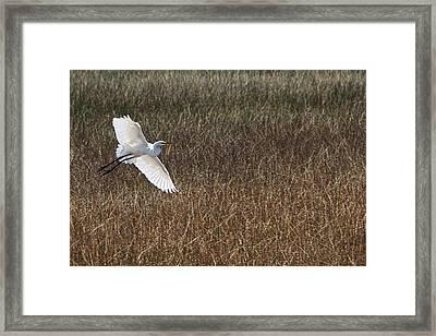 Gentle Grace Of Wings Framed Print by Chrystyne Novack