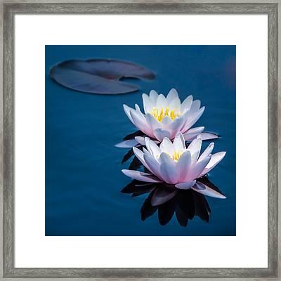 Gentle Lilies Framed Print