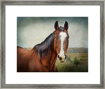Gentle  Framed Print by Maggie Terlecki