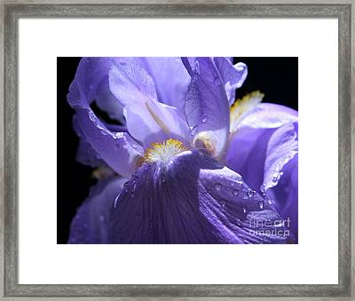 Gentle Majesty Framed Print by Krissy Katsimbras