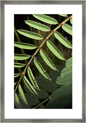 Framed Print featuring the photograph Gentle Morning Dew by Karen Musick