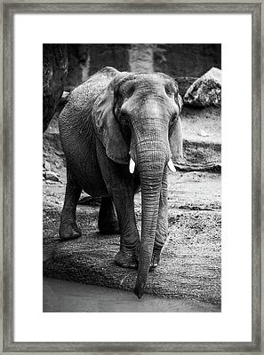 Gentle One Framed Print