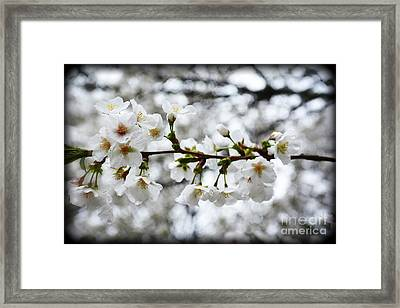 Gentle Purity Framed Print by Eva Thomas