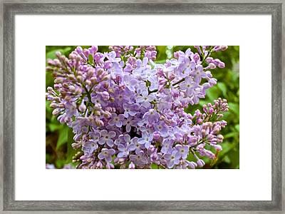 Gentle Purples Framed Print