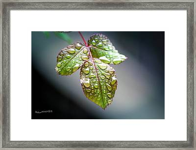 Gentle Rain Drops Framed Print
