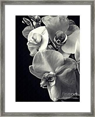 Gentle Silence Monochrome Framed Print
