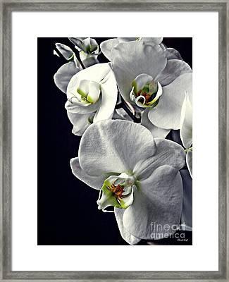 Gentle Silence   Framed Print