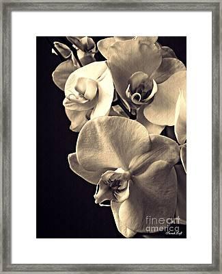 Gentle Silence Sepia Framed Print
