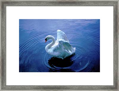 Gentle Strength Framed Print by Marie Hicks