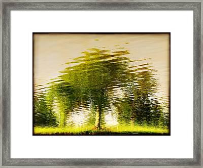 Gentle Sun  Framed Print by Dana DiPasquale