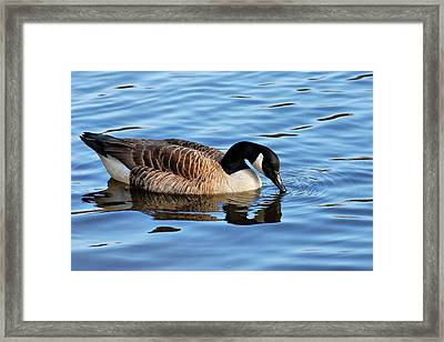 Gentle Touch Framed Print by Angie Tirado
