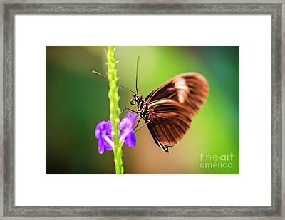 Gentle Touch Framed Print by Charles Dobbs