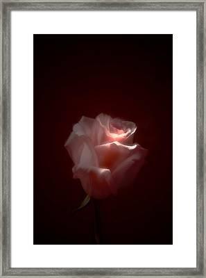 Gentle Touch  Framed Print by Margarita Buslaeva