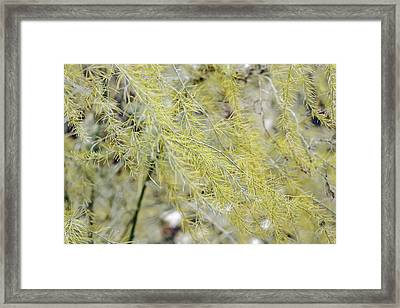 Framed Print featuring the photograph Gentle Weeds by Deborah  Crew-Johnson