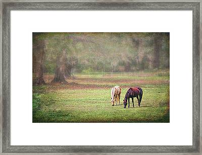 Framed Print featuring the photograph Gently Grazing by Lewis Mann