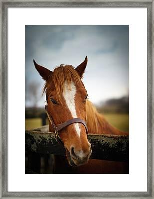 Framed Print featuring the photograph Genuine Reward by Shane Holsclaw