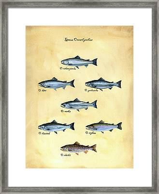Genus Oncorhynchus Framed Print by Logan Parsons