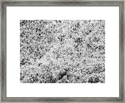 Geo Leaves Framed Print by John Toxey
