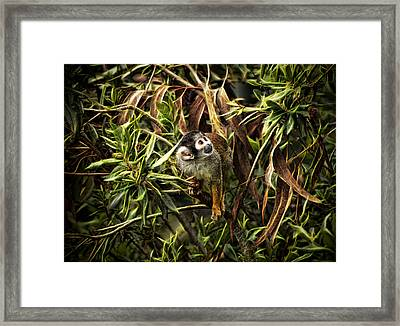 Framed Print featuring the photograph George by Cameron Wood