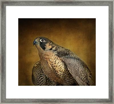 Georgette With Texture Framed Print