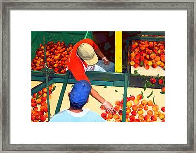 Georgia Peaches Framed Print by Rhonda Chase