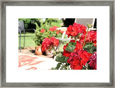 Geranium Blooms Framed Print by Hu'Net Arts