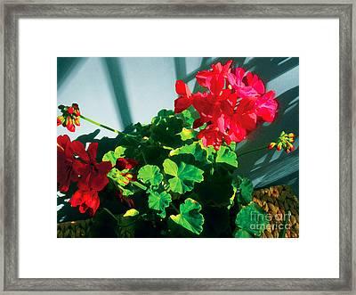 Geranium Framed Print by David Klaboe