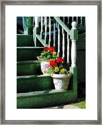 Geraniums And Pansies On Steps Framed Print
