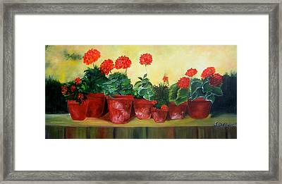 Geraniums In A Row-- Sold Framed Print