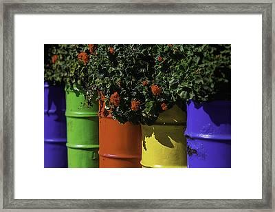 Geraniums In Colorful Barrels Framed Print