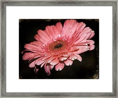 Gerber Framed Print by Cathie Tyler