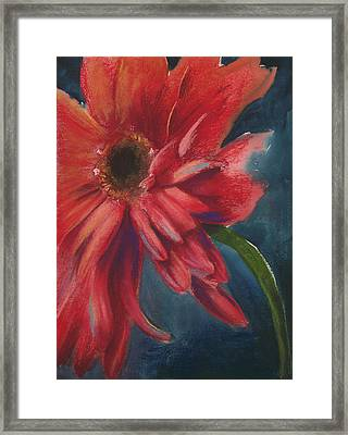 Gerber Daisy 1 Framed Print by Brandi York