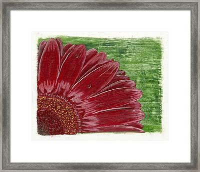 Gerber Daisy- Red Framed Print by Susan Schmitz