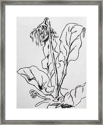 Gerber Study I Framed Print
